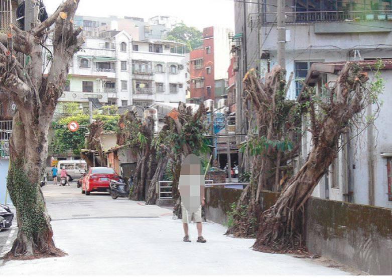基隆市曾發生區公所修剪巷道樹木時,讓巷道兩側樹木全成「光頭」。圖/聯合報系資料照片
