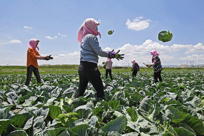 對於官方「全民脫貧」的高調宣示,許多中國網民感到相當離奇。圖為寧夏固原市西吉縣。 圖/新華社