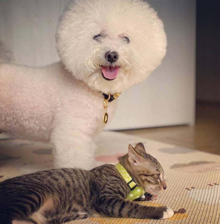 賈靜雯的愛犬miu miu與新領養的流浪貓。 圖/擷自賈靜雯臉書
