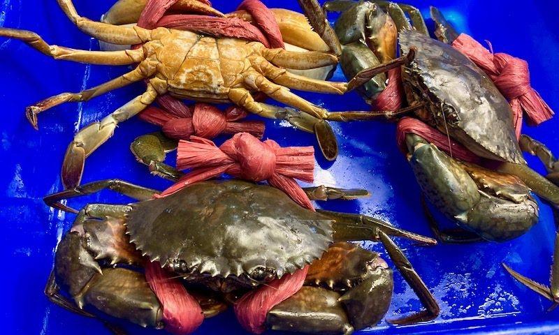"""市場裡賣沙蟳品種的螃蟹,這是公的,魚攤商都喊它""""大沙公""""。"""