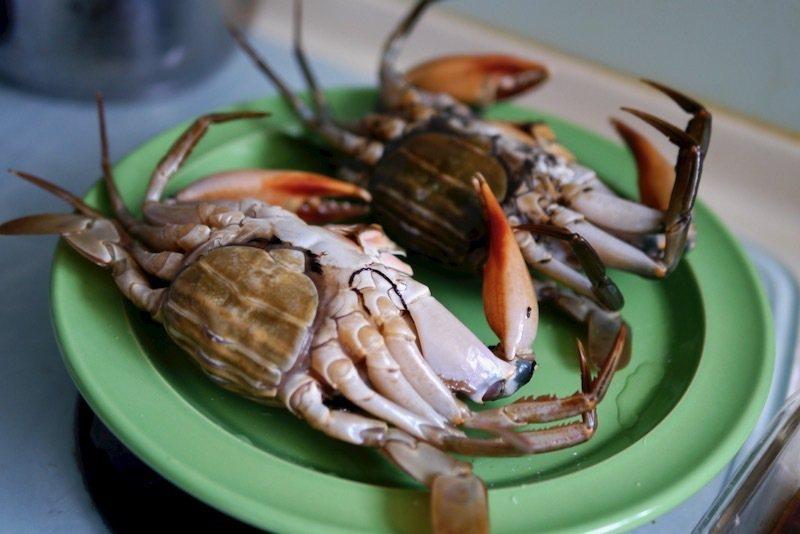 """腹部圓形的""""母""""蟹。"""