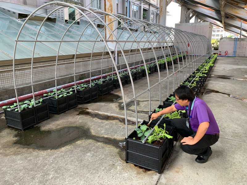 南投縣環保局在屋頂闢建實驗農場,推行蚓菜共生模式,將廚餘製成有機肥,栽培蔬果。圖/南投縣環保局提供