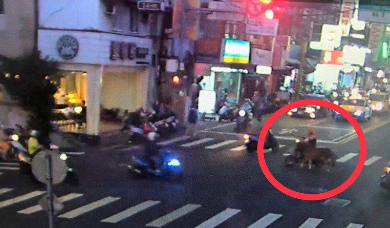 新北市板橋區大觀路街頭昨天有民眾驚見有人騎機車遛迷你馬,拍照後上傳網路引起民眾議論。記者王長鼎/翻攝