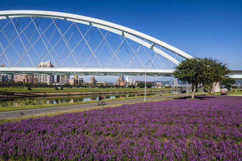 北市在麥帥一橋、麥帥二橋栽種總面積達5201平方公尺花海。圖/水利處提供