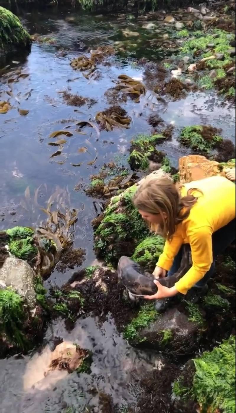 雷婭當日在岸邊發現擱淺的小鯊魚,雷婭上前俯身捉住鯊魚。(影片截圖)