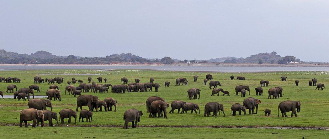 根據英國《國際發展研究所》(IIED)與其他環保團體長期的倡議追蹤,目前在斯里蘭...