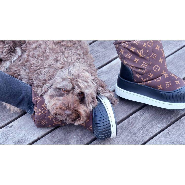 木村光希家的愛犬Amu,和路易威登Polar平底半筒靴同為可可棕色系。圖/取自I...