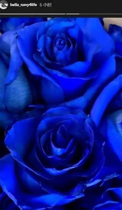 高以翔女友Bella在高以翔過世周年這一天,在IG貼出藍玫瑰花抒發思念。圖/摘自...