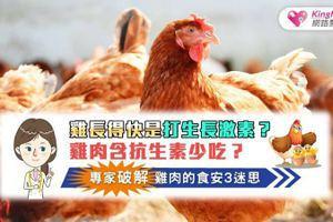 雞長得快是打生長激素?雞肉含抗生素要少吃?專家破解雞肉食安3迷思