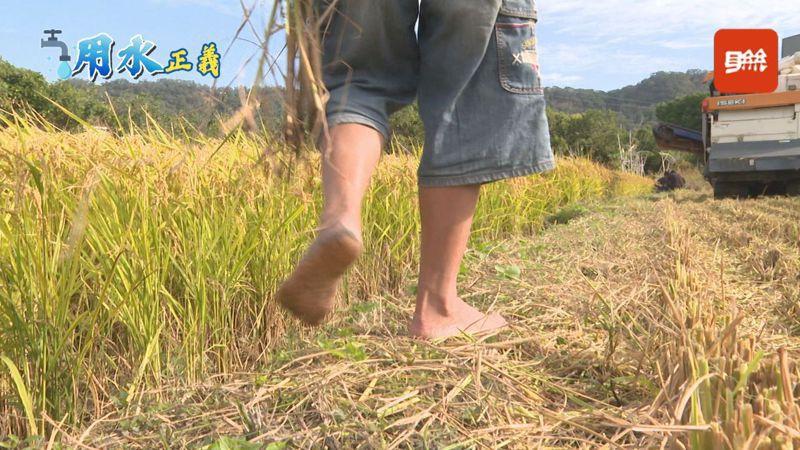 今年首度夏季無任何颱風過境台灣,面臨56年來最大旱象,農民批評時任中興大學教授的陳吉仲怒嗆馬政府犧牲農民權益,但現在陳吉仲已當官仍無對策。記者顏凱勗/攝影