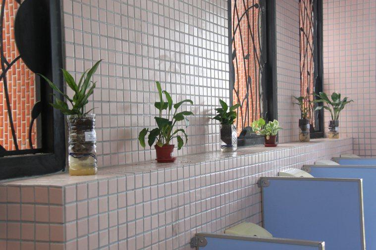 自製簡單的小品盆栽,對於淨化室內空氣品質很有幫助。圖/曾志華提供