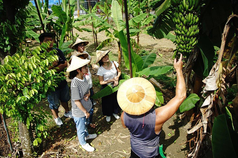 戴上斗笠走進香蕉園,認識香蕉的一生和旗山的故事。 攝影/曾信耀