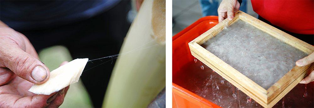 剝下香蕉假莖纖維,粗的部分可以編繩、織布,軸心部分細如髮絲,適合造紙,延長農作廢...