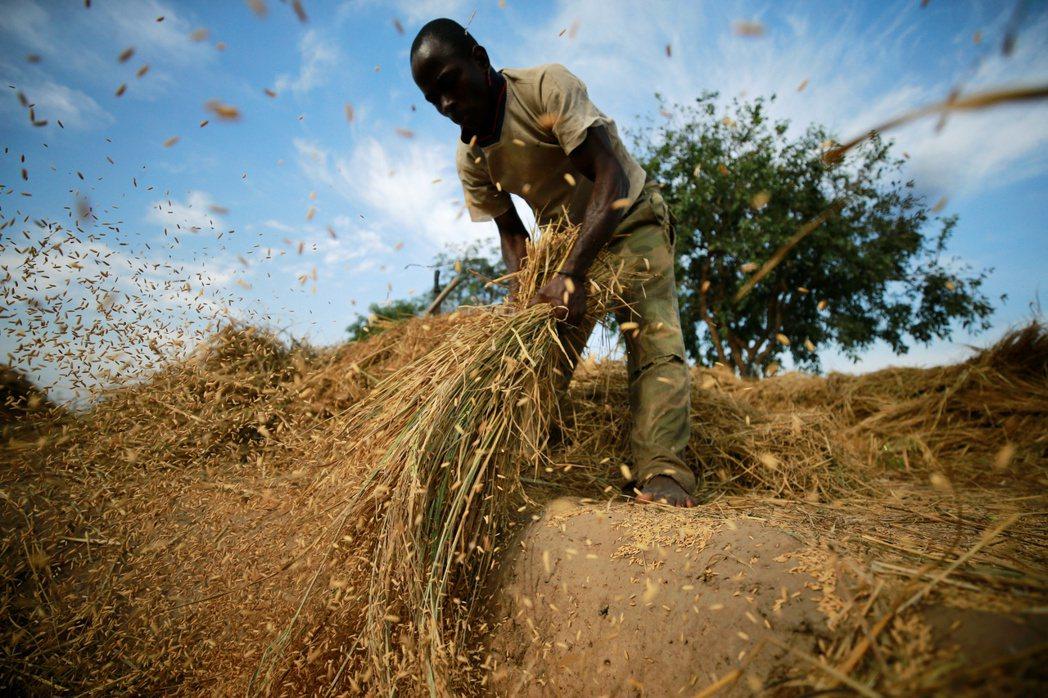 戰火頻仍的博爾諾州,過去曾是餵養奈及利亞上億人口的稻米之鄉。但自從2009年「博...