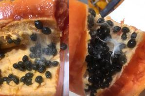 能吃嗎?木瓜切開驚見「盤絲洞」 內行勸阻曝嚴重後果