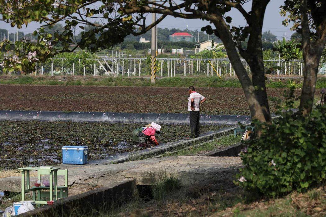 台灣最大穀倉嘉南平原,正在實現傳統產業的科技精進。(王建棟攝)