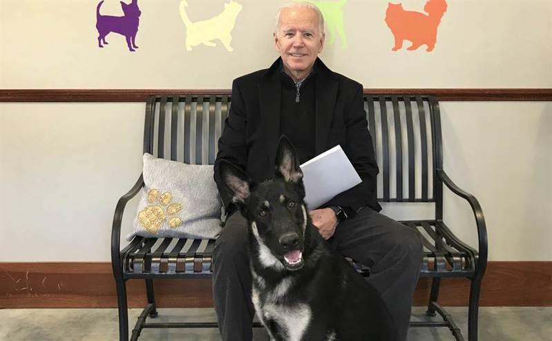 美國總統當選人拜登2018年在德拉瓦州人道協會(Delaware Humane Association),與當時剛領養的德國牧羊犬「少校」(Major)合影。美聯社