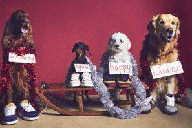 誰能比狗狗更可愛?TOD'S耶誕假期廣告融化你心