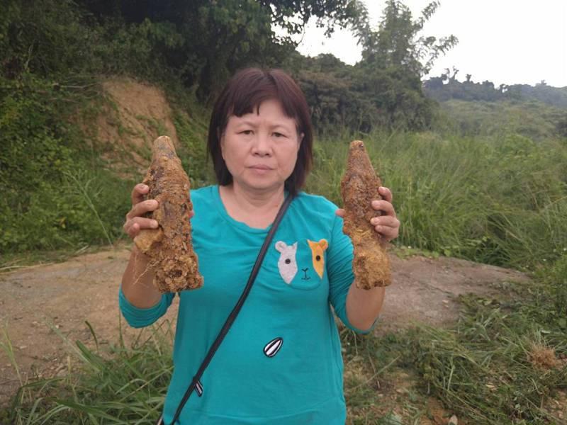 屏東議員蔣月惠徒手抓起兩顆未爆彈拍照。圖/蔣月惠提供