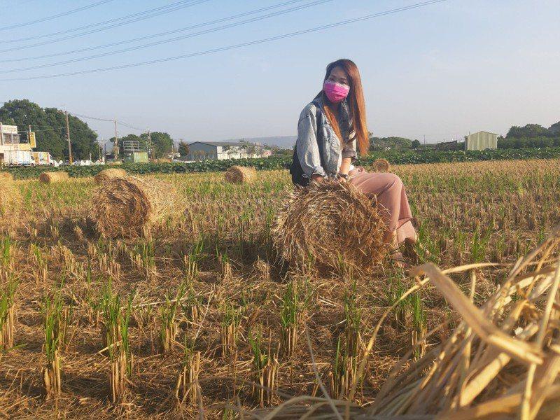 青農王崇仁專門免費收稻草再利用,捲起來的稻草意外成為農村美景,甚至吸引民眾拍網美照。圖/田中公所提供