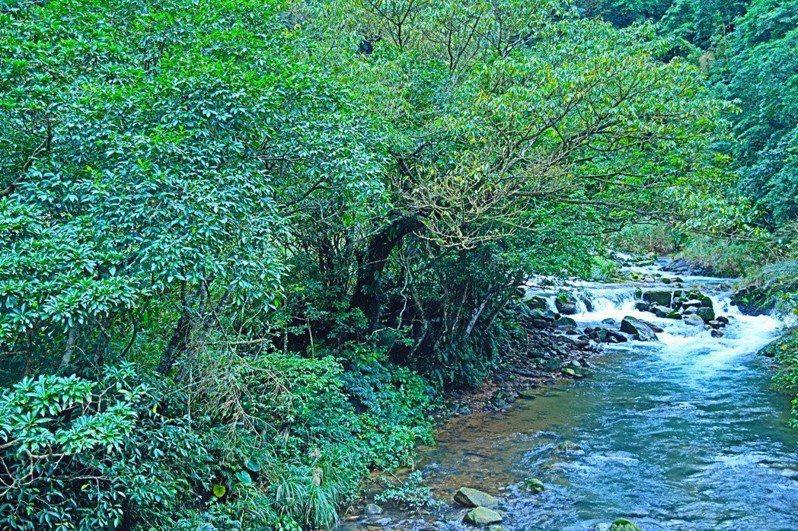 雙溪水庫預定地丁蘭谷的生態資源豐富,新北市長侯友宜昨強調蓋水庫不能破壞生態環境。 圖/簡淑慧提供