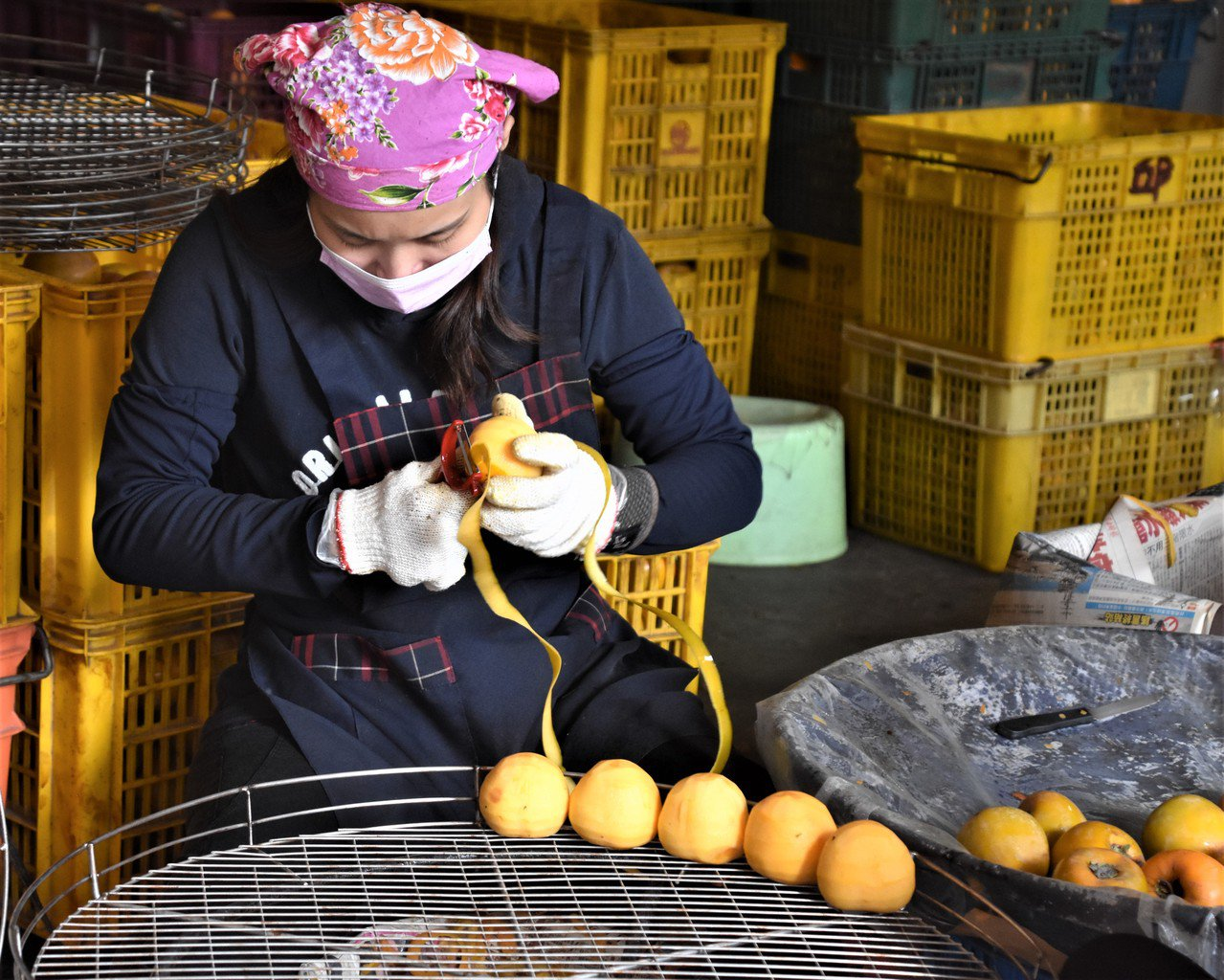 農園削柿,只見小機器不停削皮,但被機器夾住的兩頭,還需要人工收拾,熟手一刀俐落到...