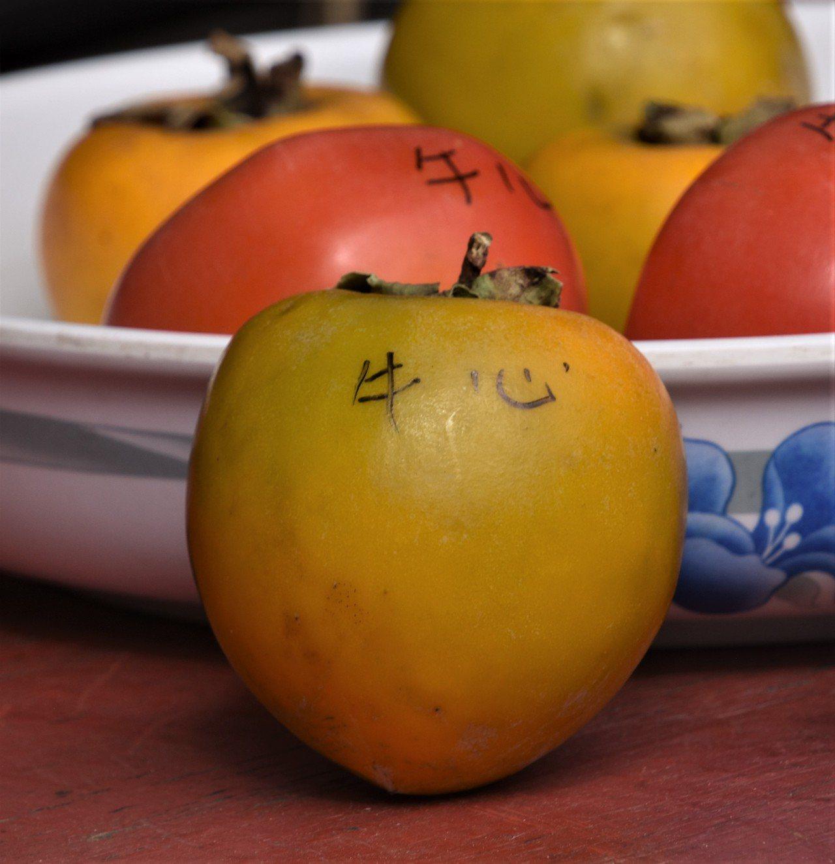 硬柿即是牛心柿,嘉義番路鄉為最大產地,是製作柿餅的主要材料 圖/沈正柔 提供