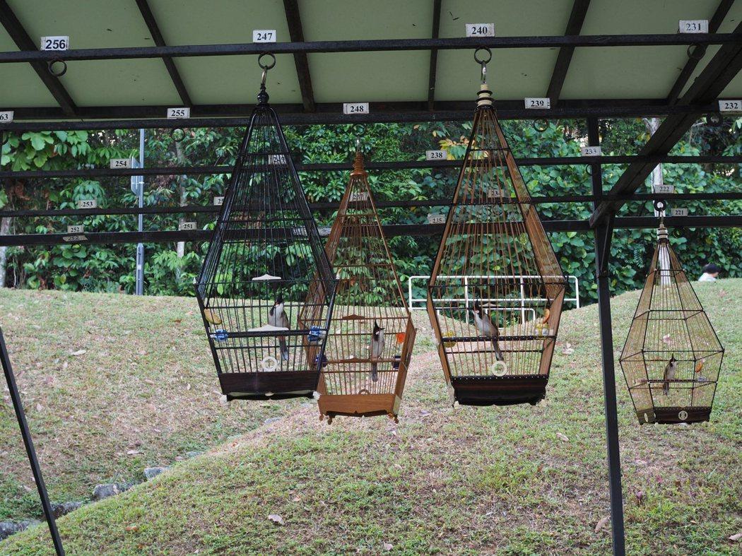 不同品種的鳥兒都有自己專屬的鳥籠造型。