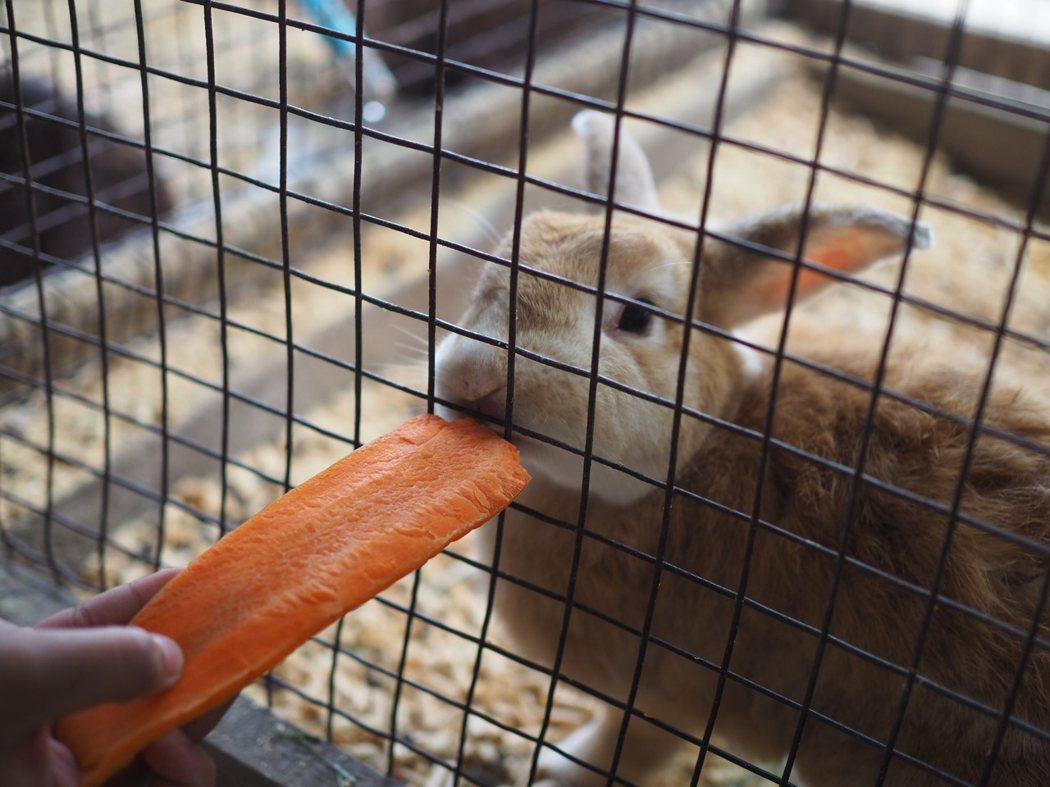 為了確保動物們的飲食品質,動物度假村要求參觀者只喂食他們所售賣的飼料。