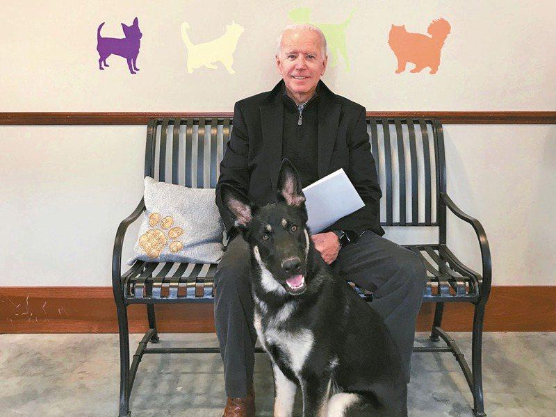美國總統當選人拜登與家犬玩時不慎扭傷腳,引來各界關心,圖為拜登2018年在德拉瓦州人道協會,與當時剛領養的德國牧羊犬「少校」合影。美聯社