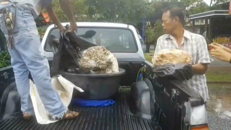 泰國南部那空是貪瑪叻府漁民納里斯11月23日在海邊發現幾個看上去有點像石頭的團塊,隨後發現可能是全世界有史以來最大量的「龍涎香」。路透/Newsflare