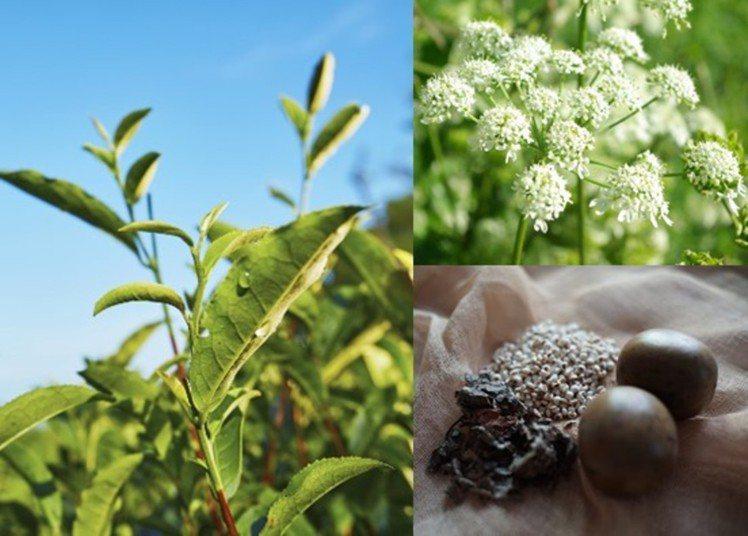 朵茉麗蔻升級進化的「基本4點」,加入產自台灣的蜜香紅茶。圖/朵茉麗蔻提供