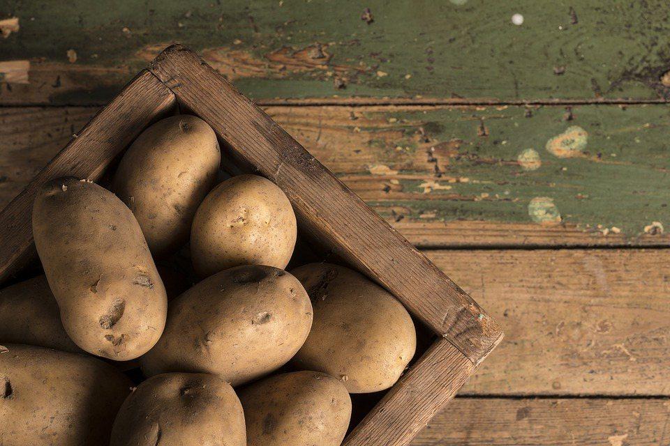 馬鈴薯開始發芽後,會產生大量的「茄鹼」,是一種天然毒素,且耐高溫,即使切除芽體或...