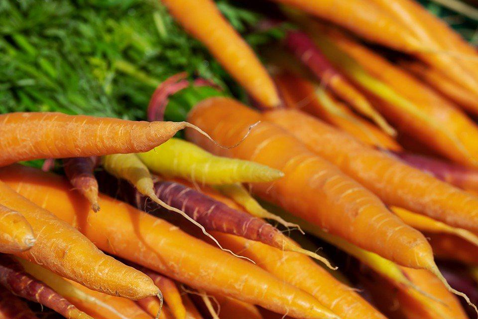 紅蘿蔔發芽後並無毒素可安心食用,但也因發芽,甜度跟營養價值都會降低,變得較不好吃...