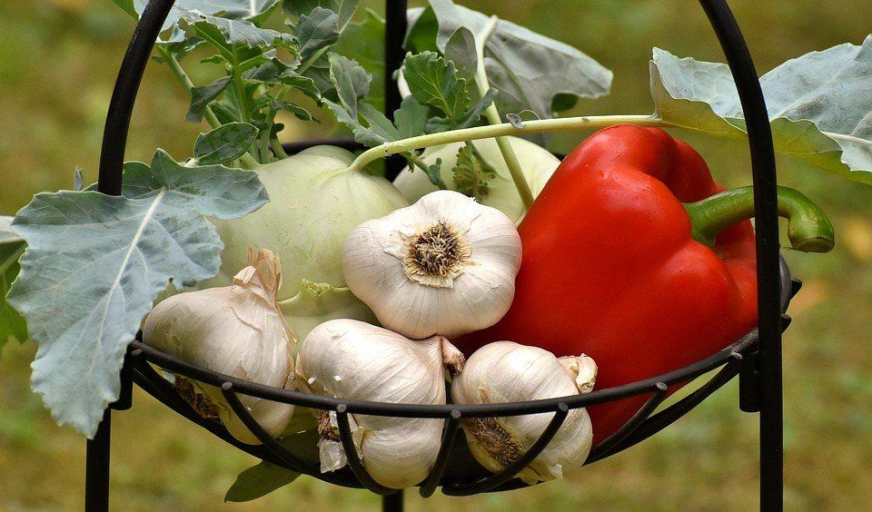 大蒜發芽後變蒜苗,含硫化合物會變高,進而形成穀胱甘肽,為人體抗氧化酵素的重要成分...