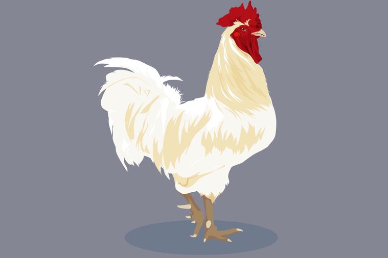 雞對於土地、水與能源投入的需求比起豬或牛都少。生產一公斤雞肉只需不到兩公斤的飼料...