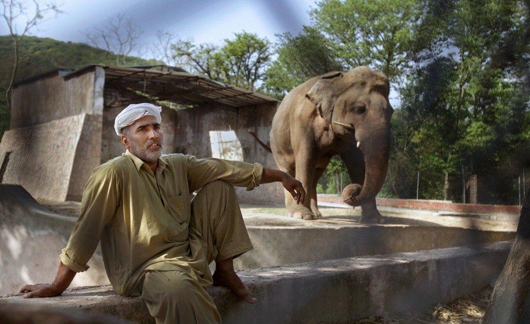 儘管生活環境極其惡劣、甚至得面對著各種染病、虐待與死亡的威脅,但大象卡萬仍成為了...
