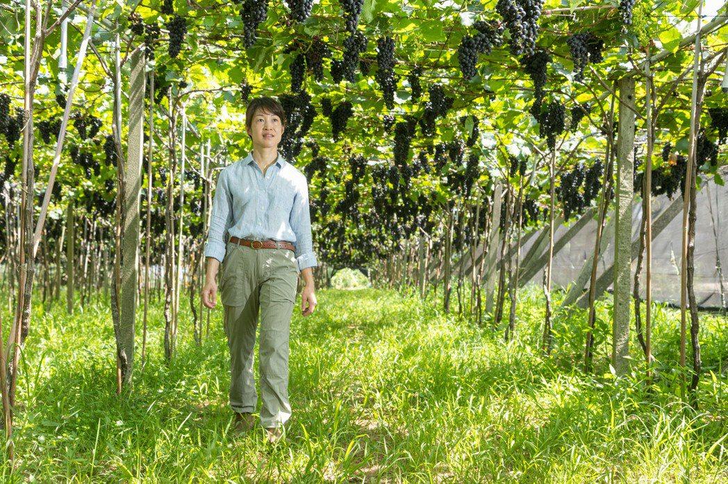 楊仁亞承接起父親的夢,讓台灣擁有自己品牌的葡萄酒。記者陳立凱/攝影<br><b ...