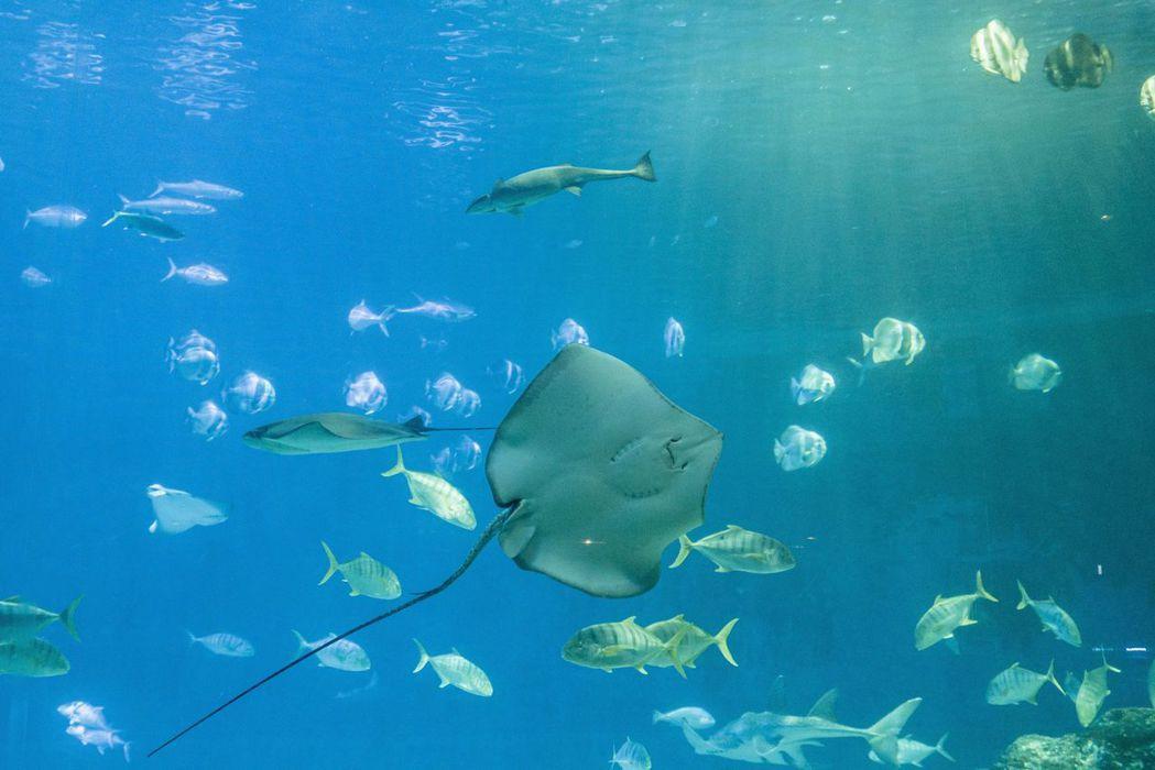 高雄海洋館將開展民眾對於海洋更多的想像及溝通。  屏東海生館 提供