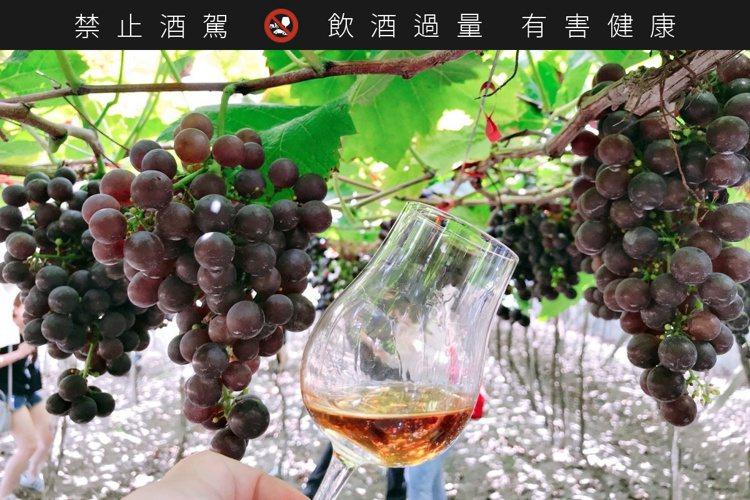 台灣的釀酒葡萄一年可以兩收,一為夏果、一是冬果。。圖/摘自好飲學院臉書。提醒您:...