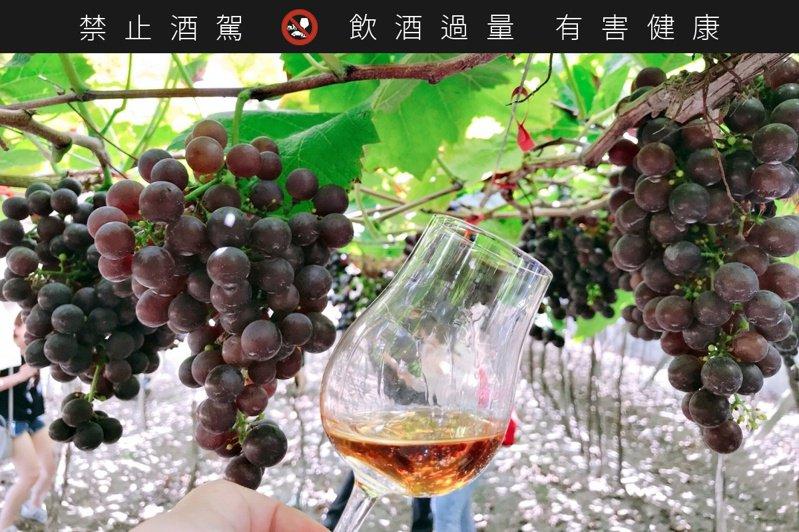 台灣的釀酒葡萄一年可以兩收,一為夏果、一是冬果。。圖/摘自好飲學院臉書。提醒您:禁止酒駕 飲酒過量有礙健康。