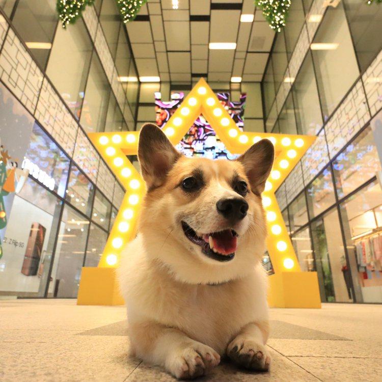 宏匯廣場耶誕季裝置。圖/宏匯廣場提供