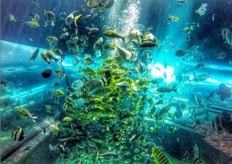三地集團今天與富邦集團簽約合作打造高雄海洋館,將是三地集團繼屏東海生館、台中海洋館後,旗下第3座海洋館,也是南台灣首座民營城市型海洋館。記者潘欣中/翻攝