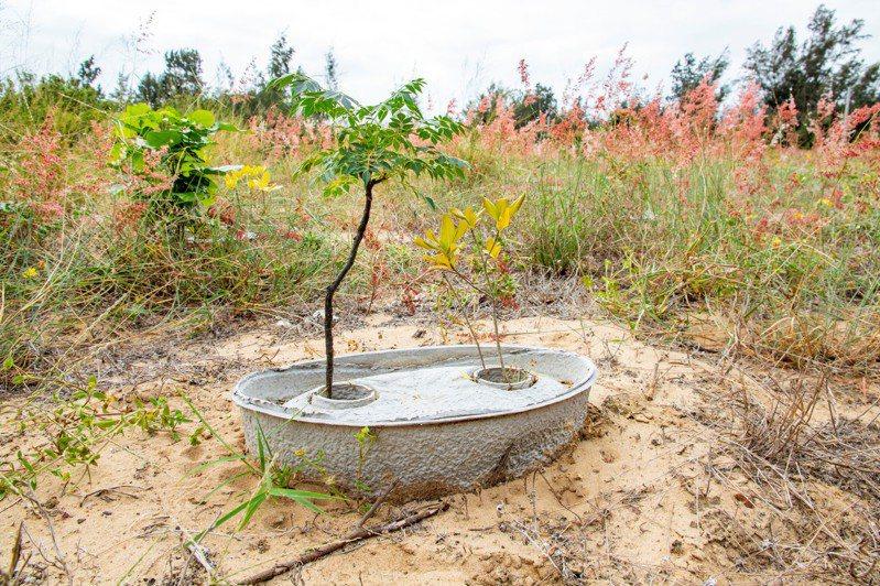 為因應極端氣候造成的乾旱,金門縣林務所學習使用造林利器「水寶盆」,解決造林地長期供水問題,不僅節約用水量,更解省人力成本。圖/縣府提供