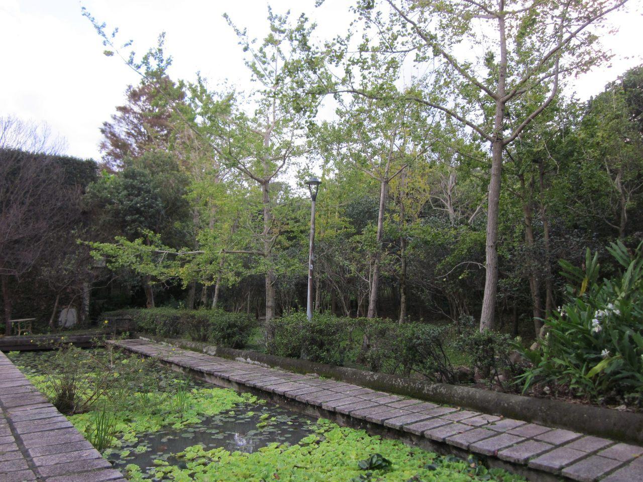 花卉試驗中心生態池旁銀杏林。 圖/台北市工務局 提供