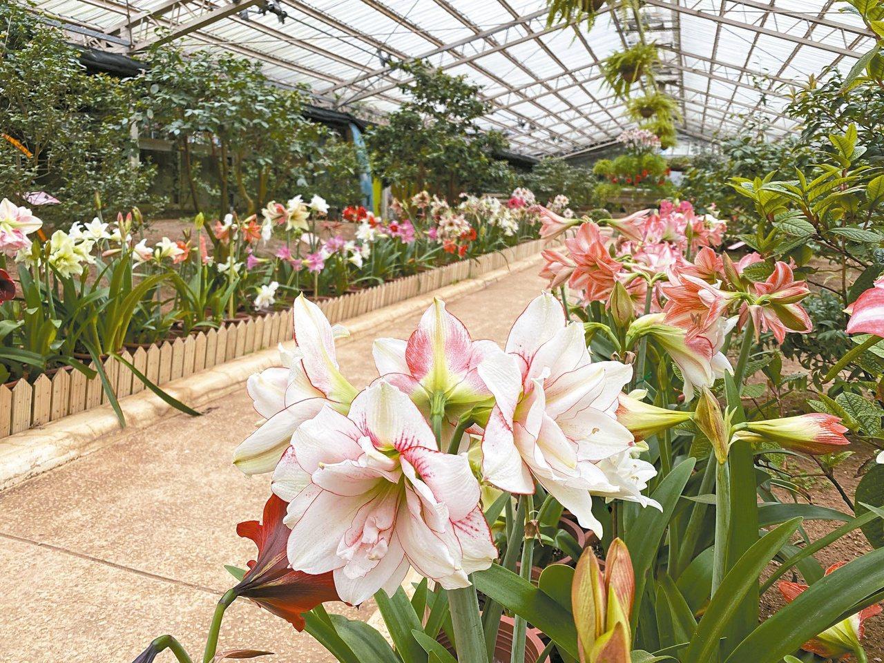 花卉試驗中心園內有十幾公頃,種植著不同季節、不同開花期的花卉 圖/台北市公園處 ...