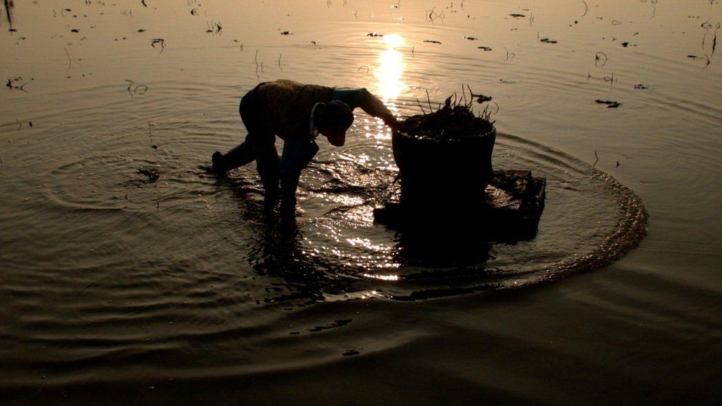 紀錄片《老鷹之手》敘述一群住在嘉義縣牛斗山的蓮藕農,如何從泥沼中挖出被大時代遺棄...