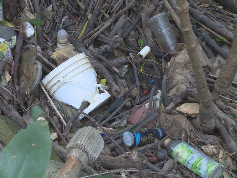 淡水河紅樹林保留區滿滿的保特瓶、塑膠垃圾,市議員鄭宇恩更要求有紅樹林保護區的管理單位。 圖/紅樹林有線電視提供