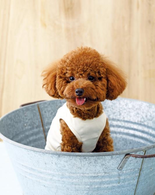 家中如有寵物,常見的臭味來源是屋內的貓砂、尿墊、寵物落毛、藏食等。 圖/摘自《日...
