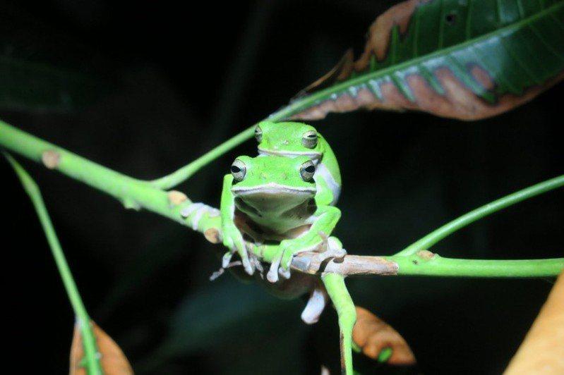 「蛙愛溪口」獲得第五屆青少年環境行動獎首獎。